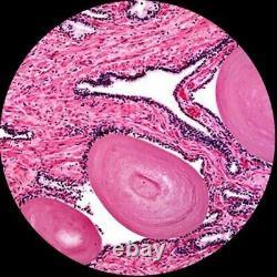 Amscope 40-1000x Microscope Led Étudiant + Appareil Photo Numérique Usb Coeurs & Fine Focus