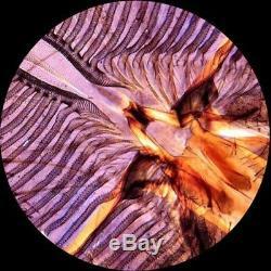 Amscope 40x-1000x Biologie Métal Verre Microscope Étudiant Avec Appareil Photo Numérique 2 Mégapixels