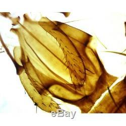 Omax 40x-2500x Biologique Composé Microscope Trinoculaire Avec 3mp Appareil Photo Numérique